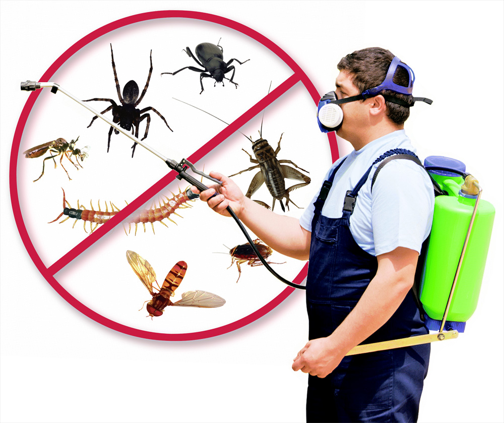 Chase Termites Out of Your Home