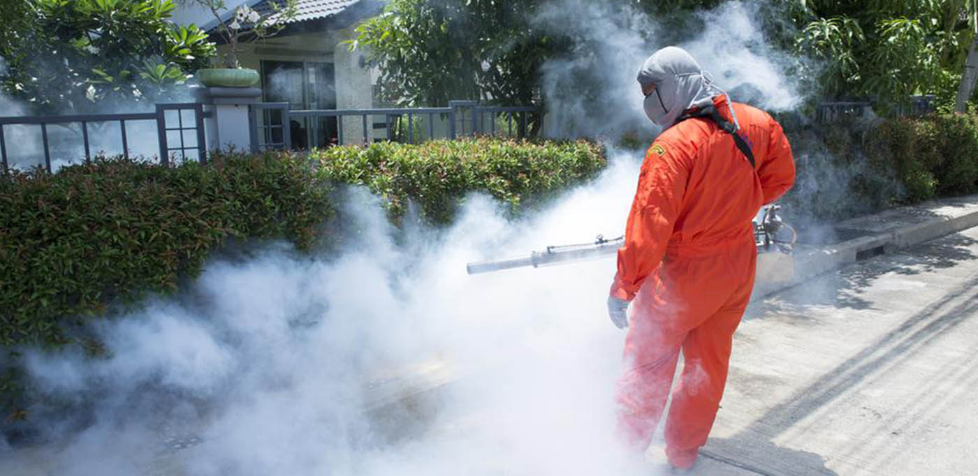 Make Your Right Effort to Find The Best Pest Control Gold Coast